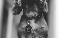 Flotte hundetegn til kvalitetsbevidste hunde