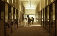 3 uundværlige genstande til din hest
